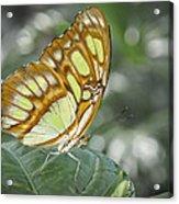 Malachite Butterfly Acrylic Print