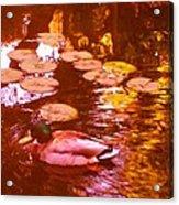 Malard Duck On Pond 3 Acrylic Print
