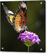 Malay Lacewing On A Flower  Acrylic Print