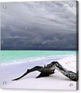 Maldives 02 Acrylic Print by Giorgio Darrigo