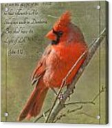 Male Cardinal On Twigs With Bible Verse Acrylic Print