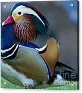 Male Mandarin Duck-signed-#8301 Acrylic Print