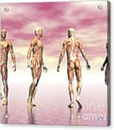 Male Muscular System From Four Points Acrylic Print