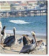 Malibu Hot Spot Acrylic Print