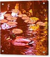 Mallard Duck On Pond 3 Square Acrylic Print