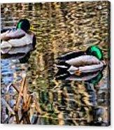 Mallards In The Reeds Acrylic Print