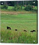 Mama Bear And 4 Cubs Acrylic Print
