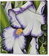 Mama's Favorite Iris Acrylic Print