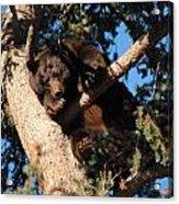 Mama's In The Tree Acrylic Print