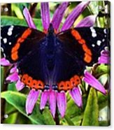 Mammoth Butterfly Acrylic Print