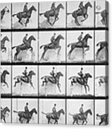 Man And Horse Jumping A Fence Acrylic Print by Eadweard Muybridge