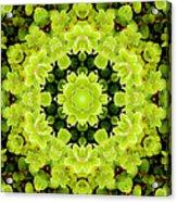 Manadala97 Acrylic Print