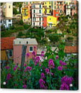 Manarola Flowers And Houses Acrylic Print