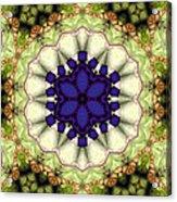 Mandala 114 Acrylic Print