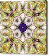 Mandala 127 Acrylic Print