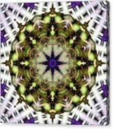 Mandala 21 Acrylic Print