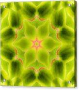 Mandala80 Acrylic Print