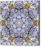 Mandala94 Acrylic Print