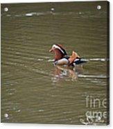 Mandarin Duck 20130507_45 Acrylic Print