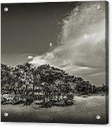 Mangrove At Low Tide Acrylic Print