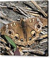 Mangrove Buckeye  Acrylic Print