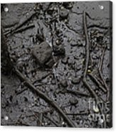 Mangrove Floor Acrylic Print