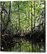mangrove forest in Costa Rica 2 Acrylic Print