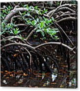 Mangrove Forest In Los Haitises National Park Dominican Republic Acrylic Print