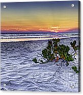 Mangrove On The Beach Acrylic Print