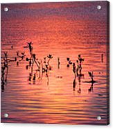 Mangrove Paradise Acrylic Print