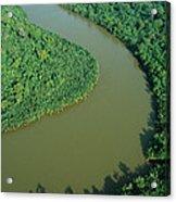 Mangrove Rhizophora Sp In Mahakam Delta Acrylic Print