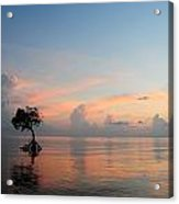 Mangrove Tree In Water At Sunrise Acrylic Print