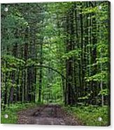 Manistee National Forest Michigan Acrylic Print