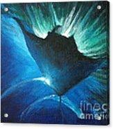 Manta At The Surface Acrylic Print
