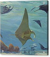Manta Ray Acrylic Print by ACE Coinage painting by Michael Rothman