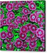 Many Blooms Acrylic Print by Michael Sokalski