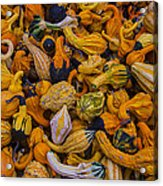 Many Colorful Gourds Acrylic Print