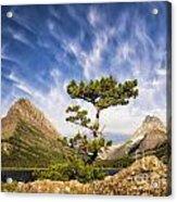 Many Glacier Tree Acrylic Print