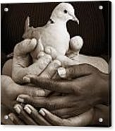 Many Hands Holding A Dove Acrylic Print