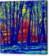Many Trees II Acrylic Print