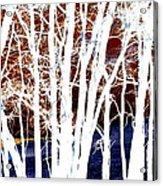 Many Trees Acrylic Print