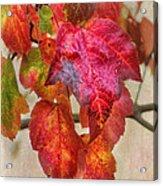 Maple Colors Acrylic Print