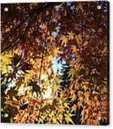 Maple In Fall Acrylic Print