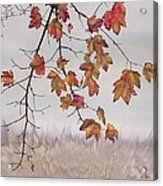 Maple In Gray Sky Acrylic Print