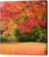 Maple In Red And Orange Acrylic Print