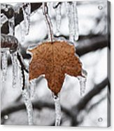 Maple Leaf Forever Acrylic Print