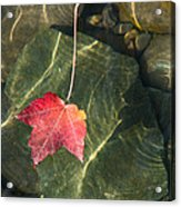 Maple Leaf On Water Acrylic Print
