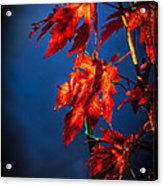Maple Leaves Shadows Acrylic Print