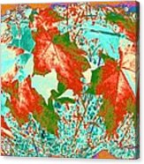 Maple Mania 28 Acrylic Print