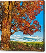 Maple Moon Acrylic Print